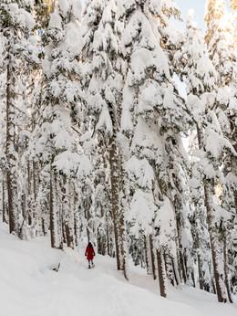 snow-covered-trees-1522284.jpg