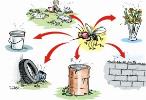 Dengue - tips to stay guarded this monsoon