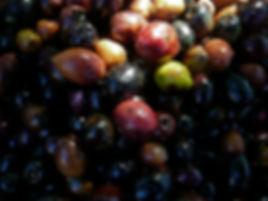 Nazcats Productions services films photo langues écriture événementiel arts plastiques graphisme olives