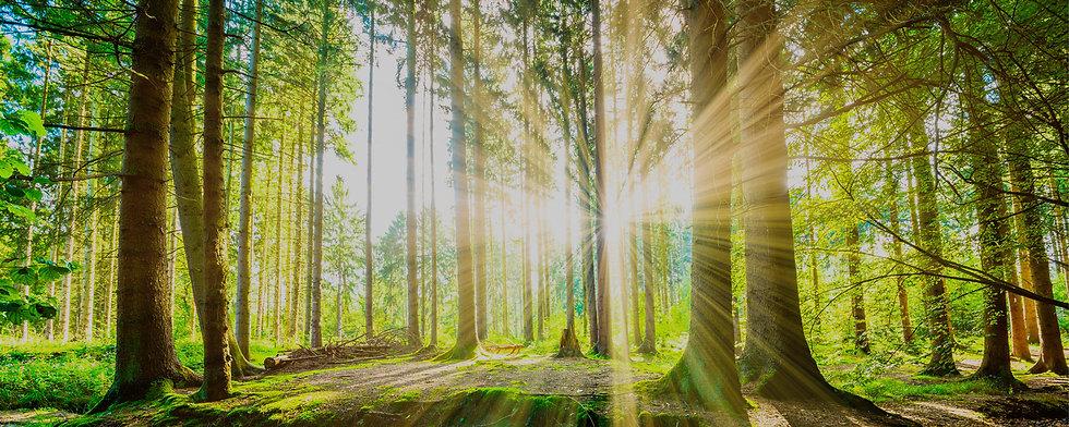 Wald an einem Sommertag