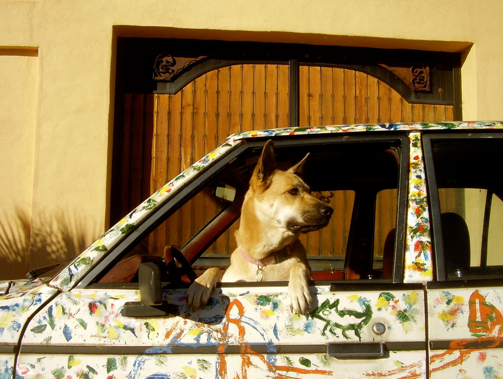 Mishka guarding the Dodge at The Art Car World Museum