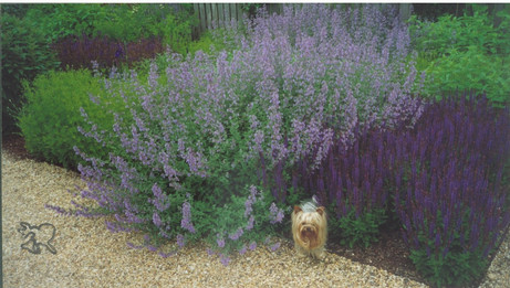 Wolfman and violet flowers in the Hamptons