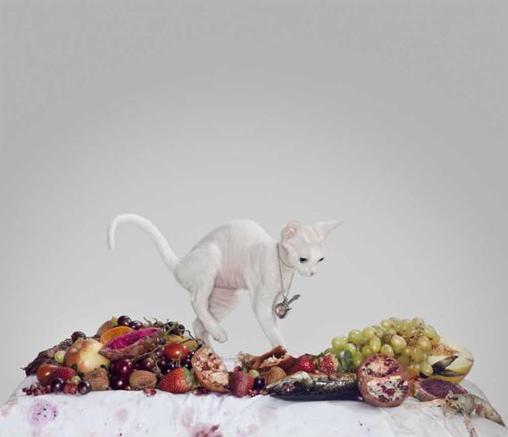 Vanitas | Homage to Monica Cook