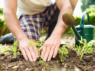 Learning About Investing Through Gardening