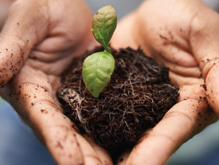 Find A Financial Planner With A Green Thumb