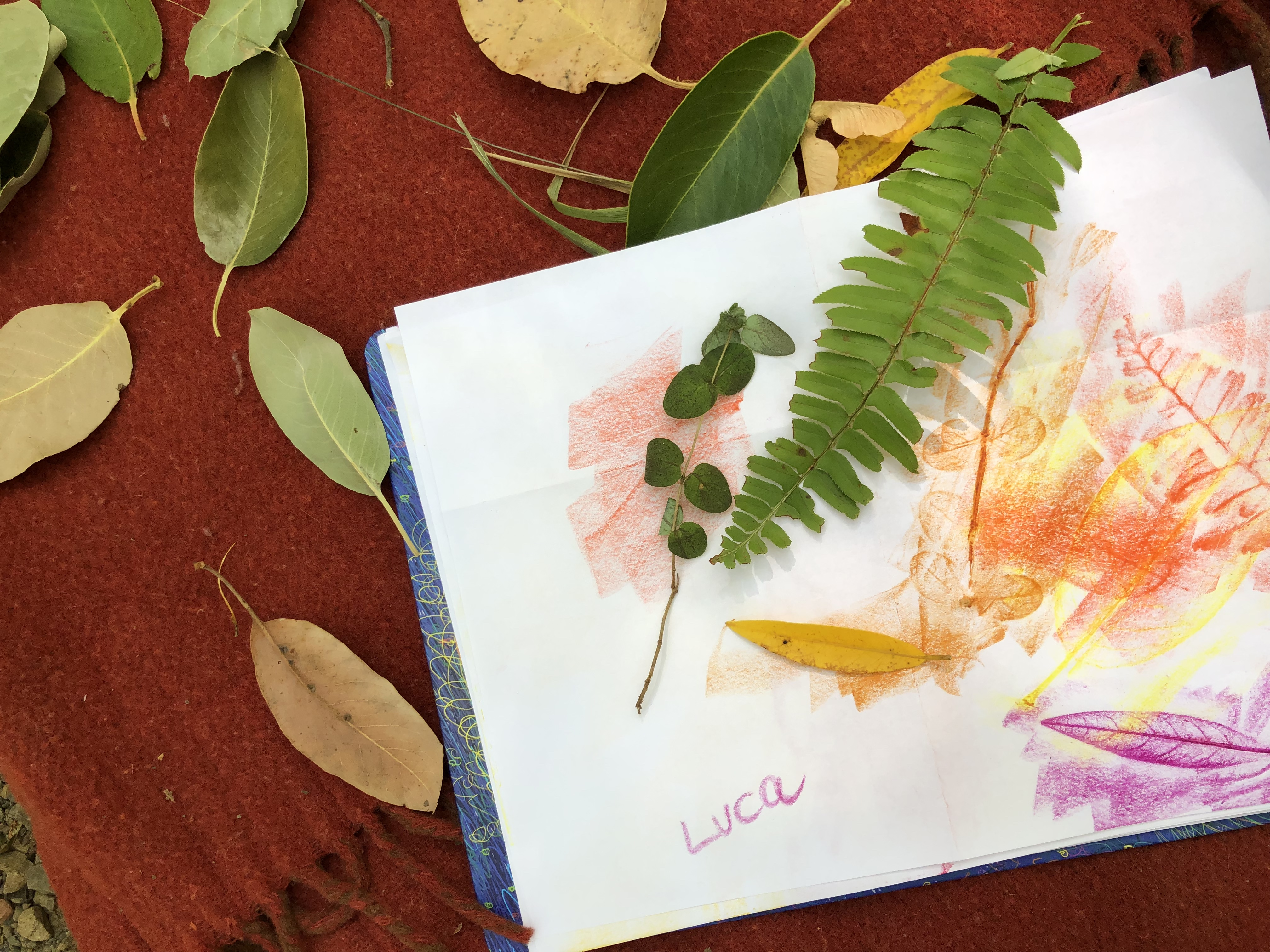 leaf rubbing is art + science + fine motor skills