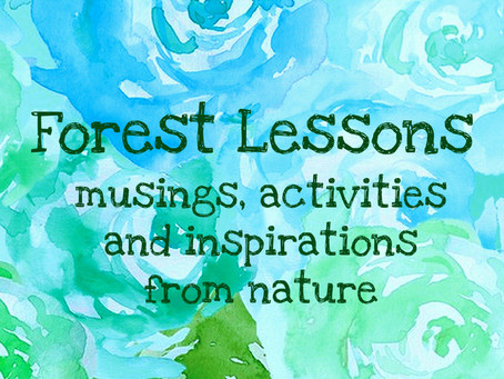 Welcome to our Forest Lessons blog