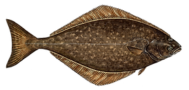 Halibut Transparent.png