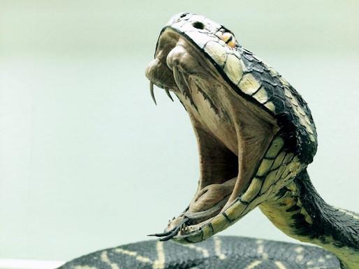 പാമ്പ് കടിച്ചാൽ പെട്ടെന്ന് ചെയ്യേണ്ട കാര്യങ്ങൾ, ഒഴിവാക്കേണ്ട അബദ്ധങ്ങൾ,what to do when a snake bites