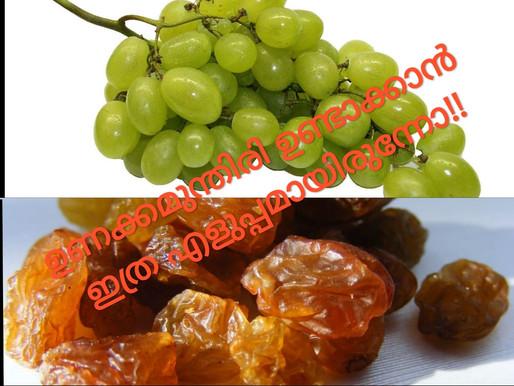 കുറഞ്ഞ ദിവസം കൊണ്ട് ഒറിജിനൽ ഉണക്കമുന്തിരി ready;how to make kissmiss(dried grapes) within few days