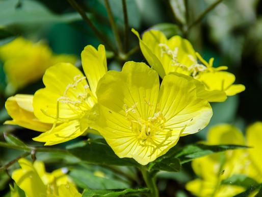 A FLOWER BLOSSOMS WHEN AZAN STARTS!! WONDERFUL