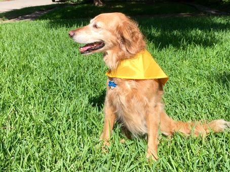 Therapy Dogs to Promote Mental Wellbeing- HeadFirst Counseling, Dallas TX