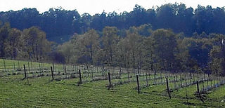 The upper vineyard was added in 2007.
