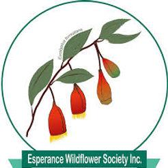 EWS logo.jpeg