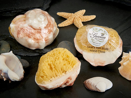 Conch Shell Soap w/embedded Natural Sea Sponge