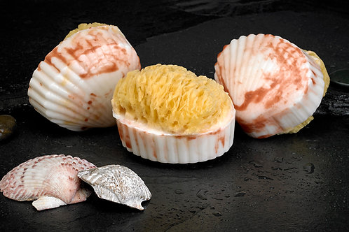 Clam Shell Soap w/embedded Natural Sea Sponge