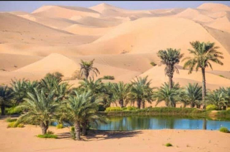 oasis pic.jpg