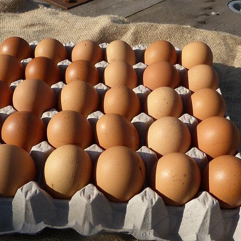 10 Bio-Eier