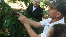 Nicaraguan Coffee: 20 Years, 3 disasters, immeasurable impact