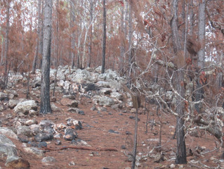 From the Ashes: Ocotal Recovers From Forest Fire