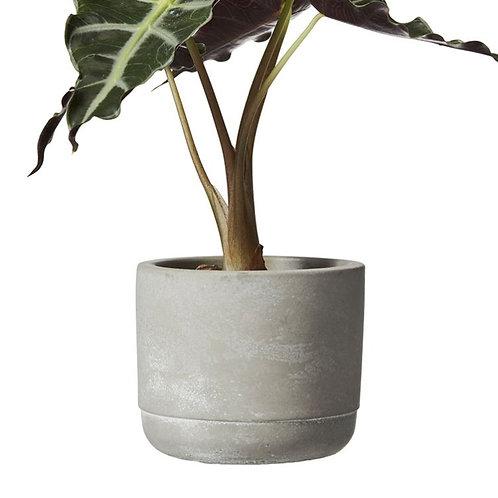 Minipot Grau