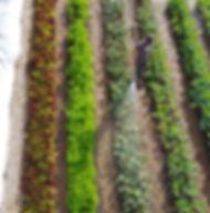Market Garden; Grönsaker