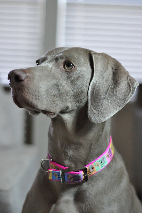 SHOP DC WEIM COLLARS