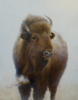 Buffalo with Cloud for web