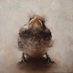 baby mocking bird nancy taliaferro