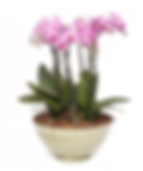 orchid bowl.png