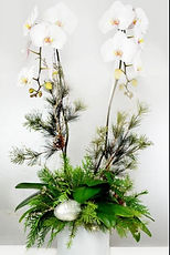 holiday orchid.JPG