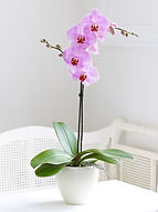 orchid plant.jpg