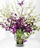 orchidsmom.jpg