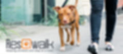resqwalk-walk-for-homeless-pets.jpg