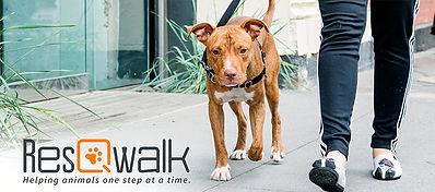 resqwalk-walk-for-homeless-pets.jpg