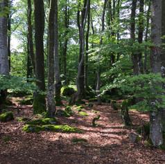 Moudrý les