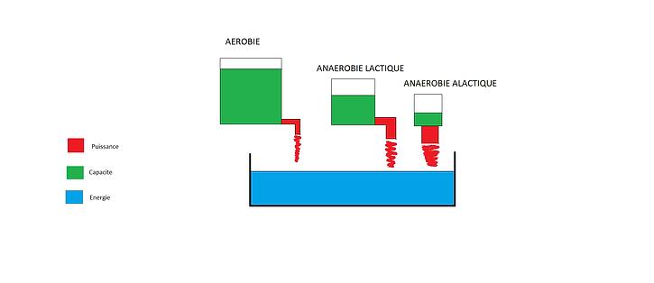 Schéma des différente filières énergétiques avec leur capacité et puissance