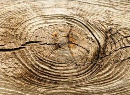 nudo,  en la madera