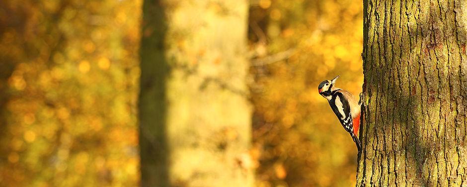 Male_Woody.jpg