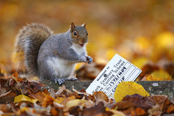 Cemetery_Squirrel.jpg