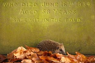 Cemetery_Hog.jpg