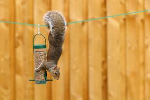 Cheeky Squirrel.jpg