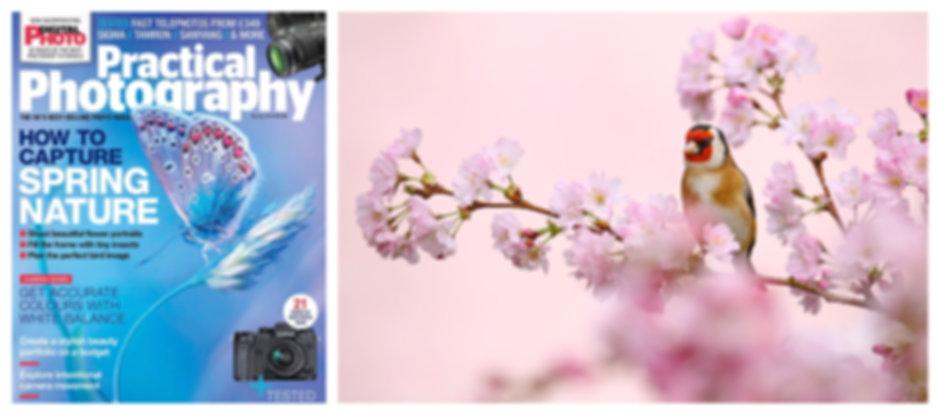 PP_Spring_Birds_18.jpg