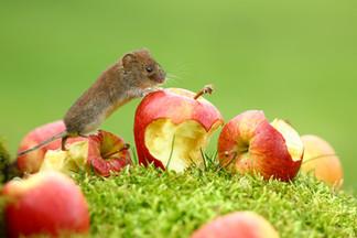 Big Apple.jpg