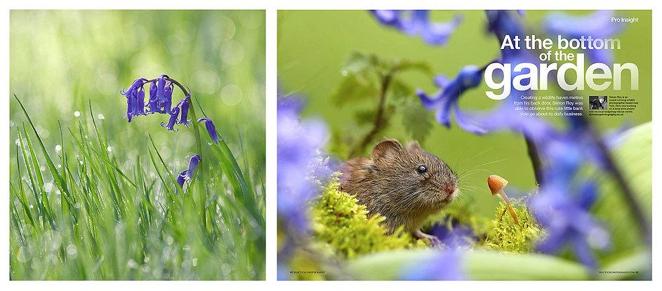 PP_Spring_4pp.jpg