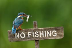 No_Fishing.jpg