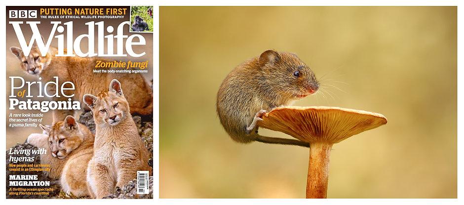 BBC_Wildlife_September_20.jpg