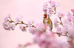 Spring_Gold.jpg
