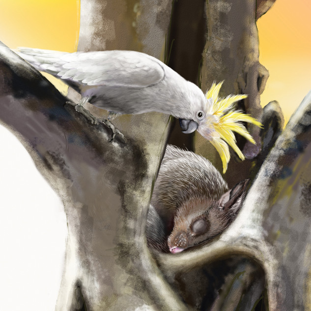 Possum & Cockatoo