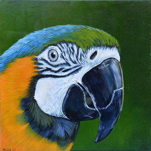 ACRYLIC PAINTING - Blue & Gold Macaw 2